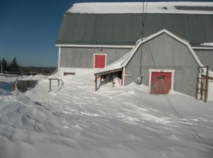 Snow accumulated in front of the barn