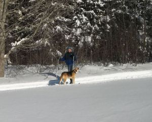 Out on skis with the puppy